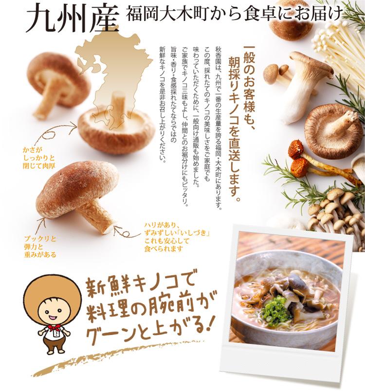九州産きのこ 福岡 大木町から朝採りきのこを直送します。